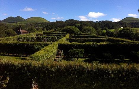 Actividades agrícolas em São Miguel, Açores
